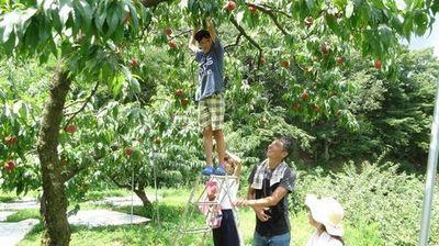 初めてのフルーツ狩り果物狩りどこがオススメ?山梨御坂観光農園夏桃狩り.jpg