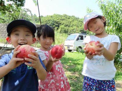 富士山近くの果物ぶどう桃狩り笛吹市御坂町一番人気農園食べ放題.jpg