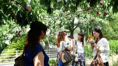 山梨桃狩り富士山周辺農園お盆過ぎから8月末楽しめる場所.jpg