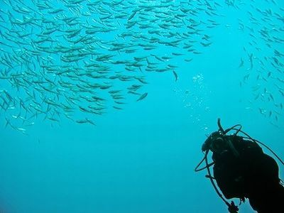 潜水どうでしょう口コミ沖縄ノープランダイビング