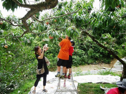 神奈川から神奈川近く山梨のおすすめ桃狩り食べ放題時間無制限