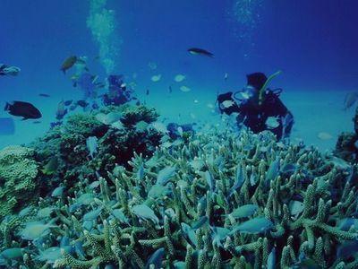 ・沖縄那覇市のGW観光旅行でおすすめ。貸切体験ダイビングできるショップ。少人数未経験者初心者高齢者向け